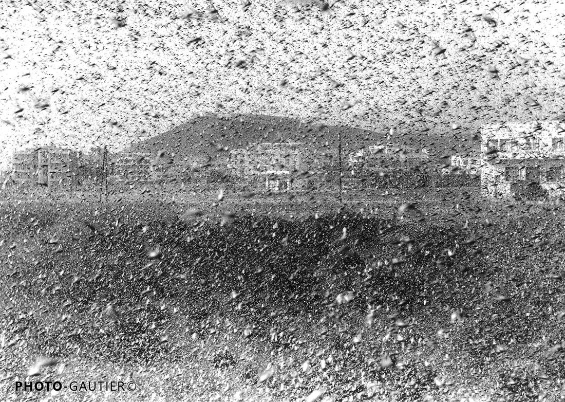 criquets sauterelles invasion insectes fléau huitième plaie nuage attaque nuée infestation