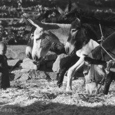 portrait d'un jeune enfant en face d'ânes