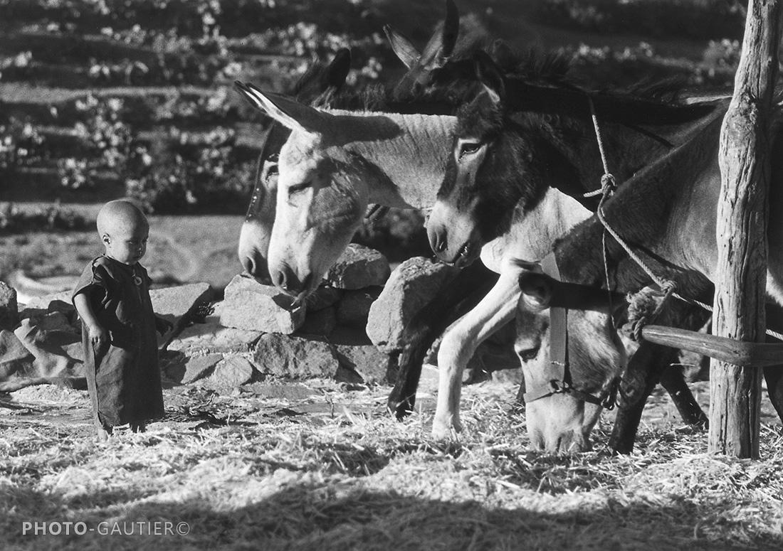 portrait campagne ânes enfant écraser grains blé attelage blé moisson