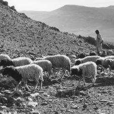 photo d'un berger avec ses moutons dans la montagne