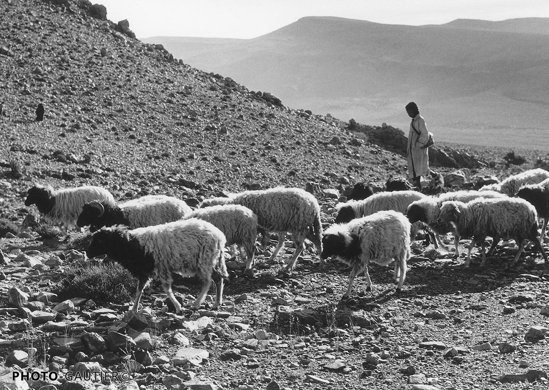 portrait paysan moutons troupeau montagne