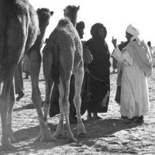 photo d'une vente au marché aux animaux de Tindouf