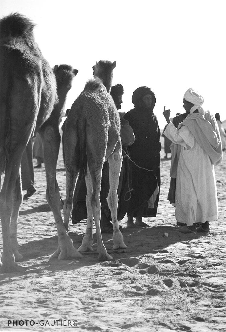 souk hommes et dromadaires chameaux transaction index main direction