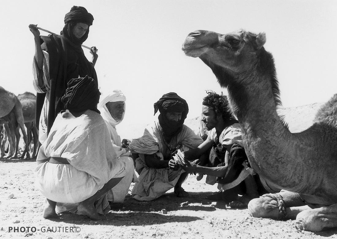 souk hommes et dromadaires chameaux transaction entrave accroupis