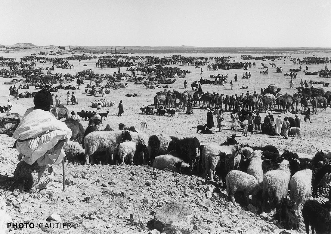 Agadir souk vente chameaux moussem rassemblement puissance royaume richesse