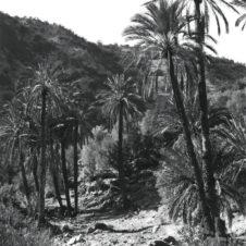 photo d'un chemin avec des palmiers et une montagne