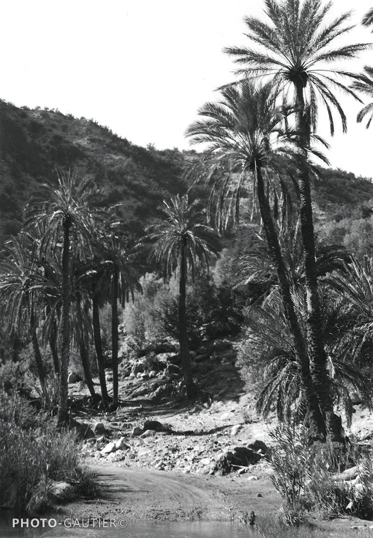 paysage palmiers montagne palmeraie route piste boue flaque