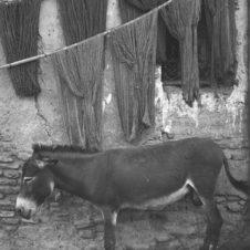 photo d'un âne faisant une sieste sous de la laine suspendue contre un mur