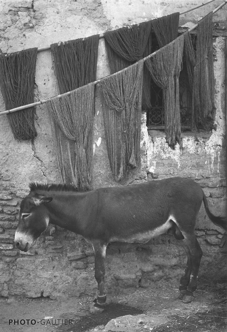 animaux sieste ombre filet laine teinture sécher repos mur